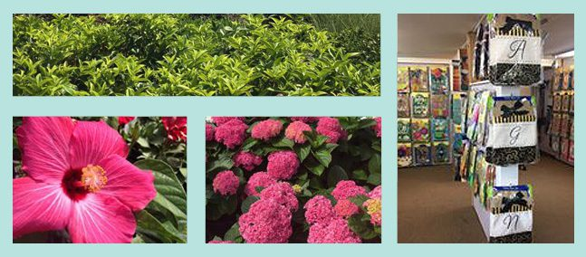 wilsons nursery garden center flowers - Wilsons Garden Center